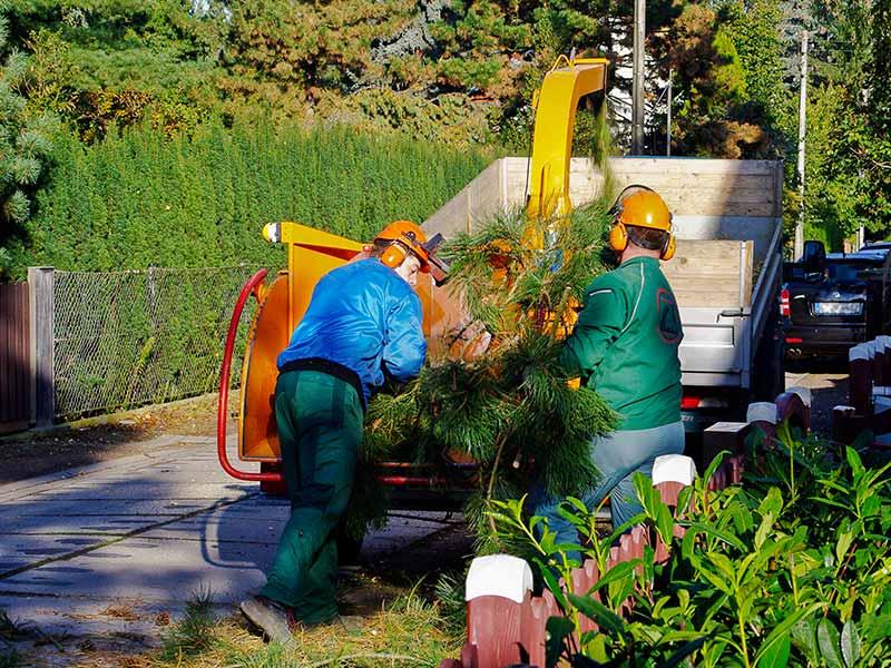 Bekannt Baumfällung und Baumfällarbeiten - Gartenservice Leipzig VP78